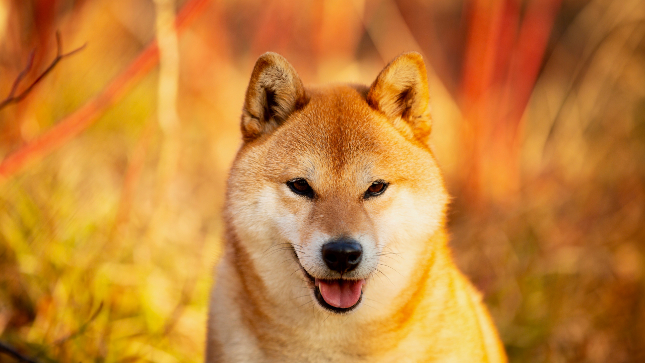 Dogecoin may have started as a joke, but its addition to the Coinbase Wallet may help it to take off. Will Binance and Huobi be next?