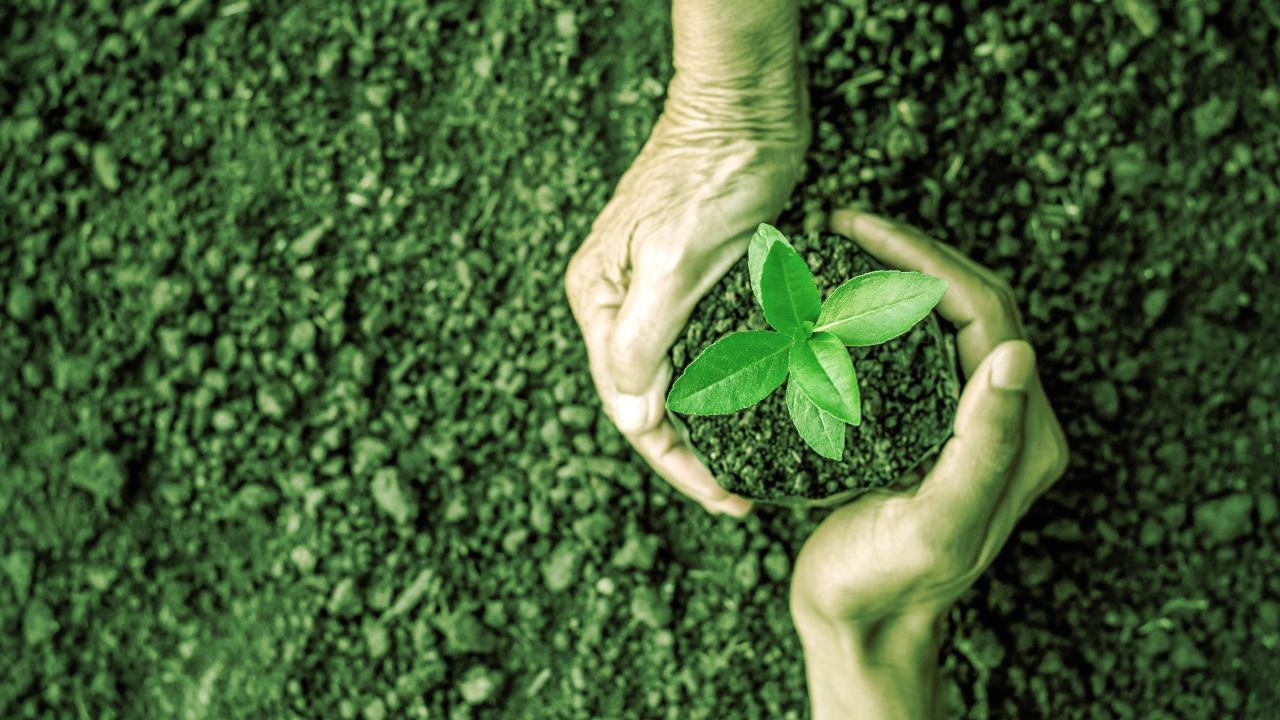 SUKU's New NFT Platform Claims to Be 'Carbon Negative'