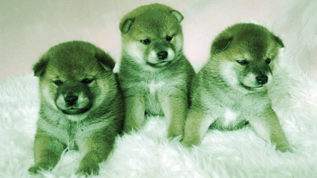 Meme Coin Pack Flocks to Baby Doge as Dogecoin, SafeMoon and SHIB Slip